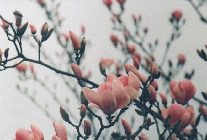 flower buds.jpg